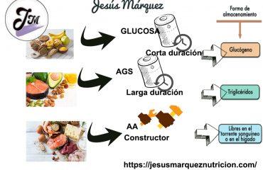 AbsorcionJesusMarquezNutricion