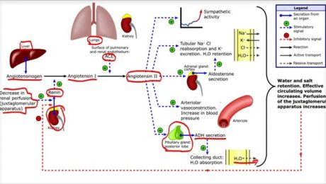 angioTensina sinLactosa aceiteNUTRI jesus marquez nutricion
